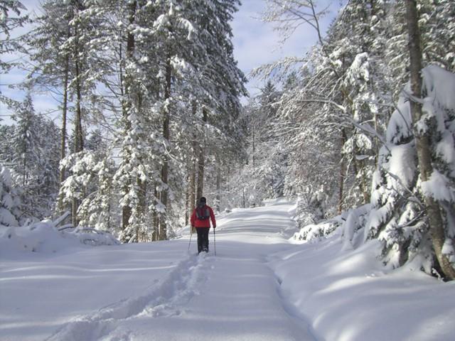 Schneeschuhwandern Ferienwohnung Inzell am Römerweg 'Wald